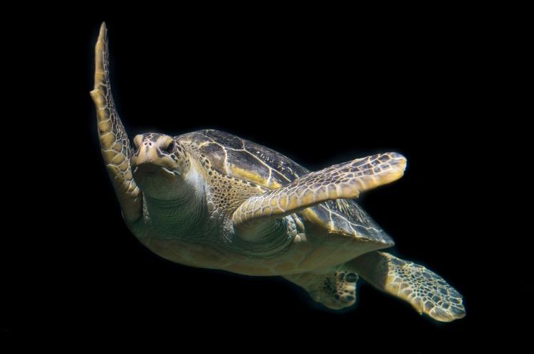 turtle-1593875_1920.jpg